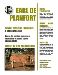 Elevage de vaches Limousines Planfort